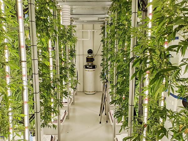 STEM-Cultivation-Agricultural-2