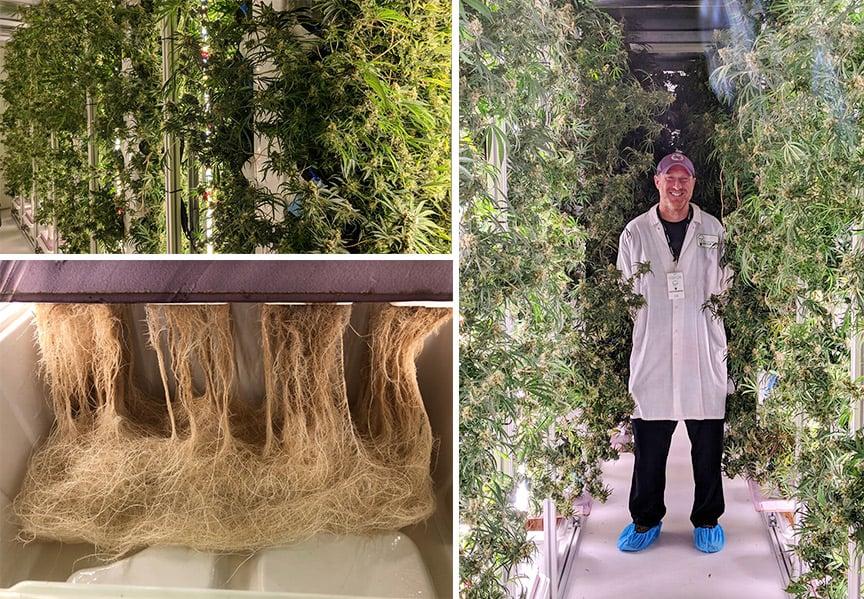 STEM-Cultivation